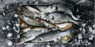 Strong figures for salmon farming
